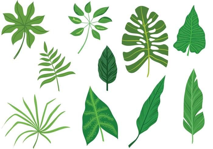 Free Tropical Leaves Vectors ガーデンアート