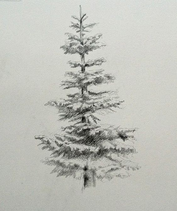 How to draw and paint evergreen trees
