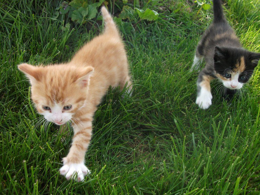 Walking Kittens By Lena Panthera On Deviantart Kittens Kittens Cutest Cute Cats