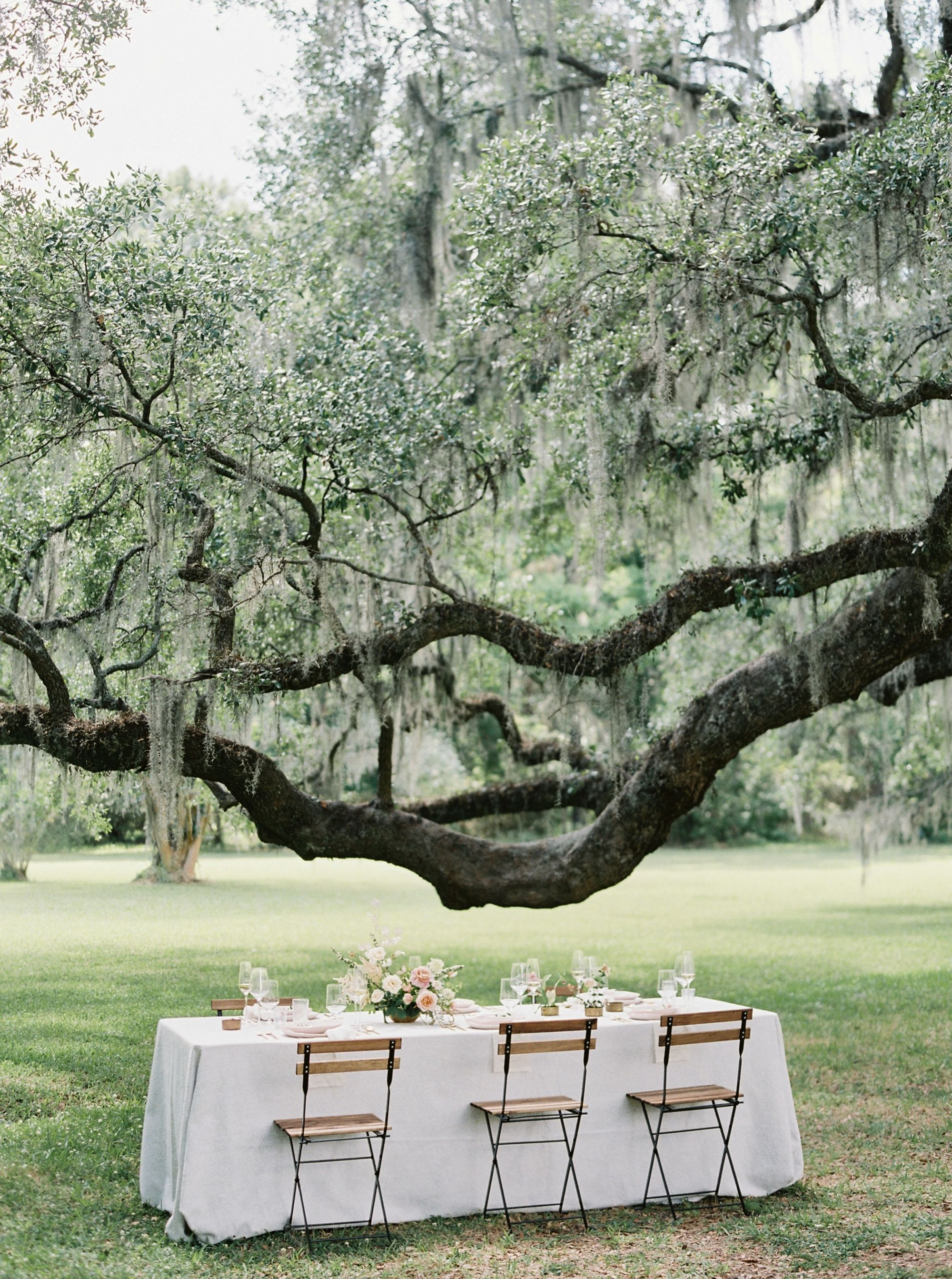 A Blush Colored Ode to Classic Southern Beauty Oak tree