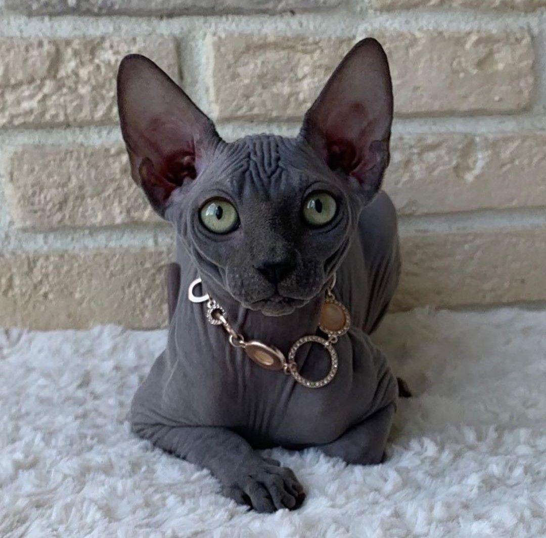 Disegni iDee ? in 2020 Most beautiful cat breeds, Cute