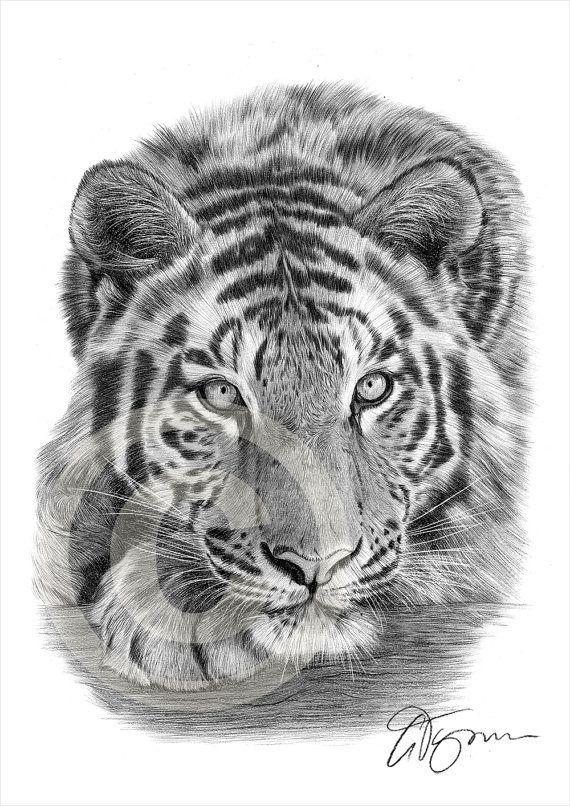 Sumatran Tiger Pencil Drawing Print Big Cat Art Artwork Signed By Artist Gary Tymon 2 Sizes Ltd Ed 50 Prints Only Pencil Portrait Zeichnungen Tiere Zeichnungen Und Katzen Kunst