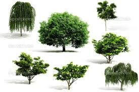 Image result for Revit RPC Tree Guide | Landscape Architecture