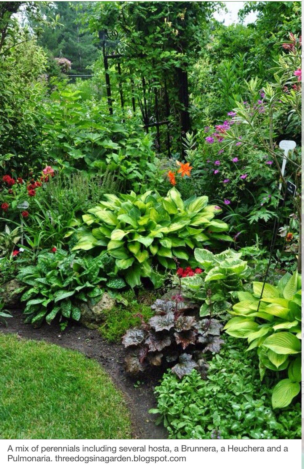 Love This For Shady Spots Tuin Shade Garden Tuin Ideeen