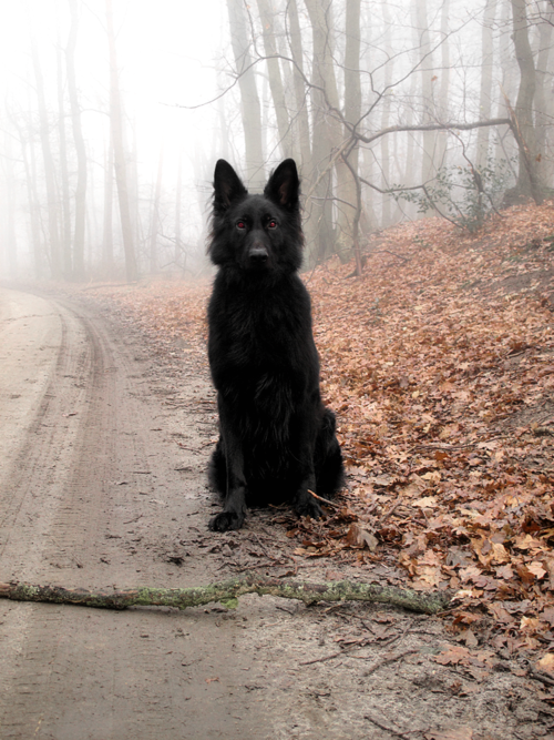 A Dog On A Road In Autumn Animals Black Dog Dogs