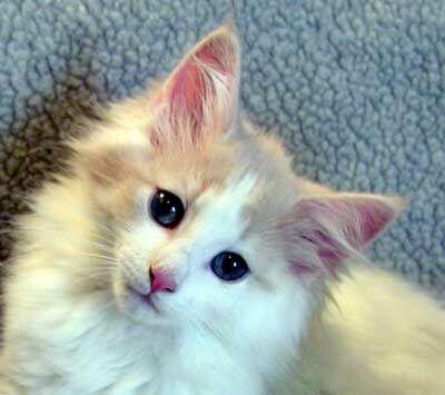 Imagen de adorable, animal, and animals