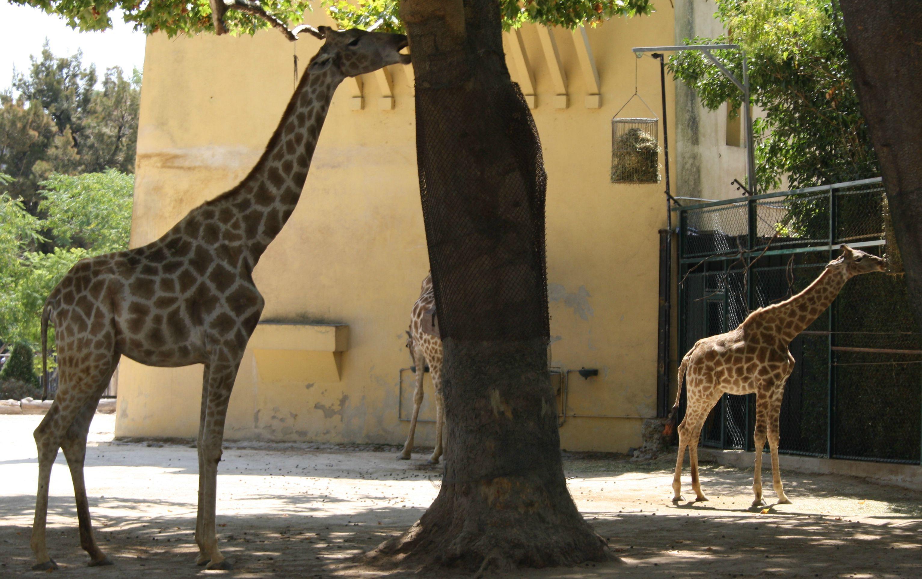 jardim zoologico 33.jpg