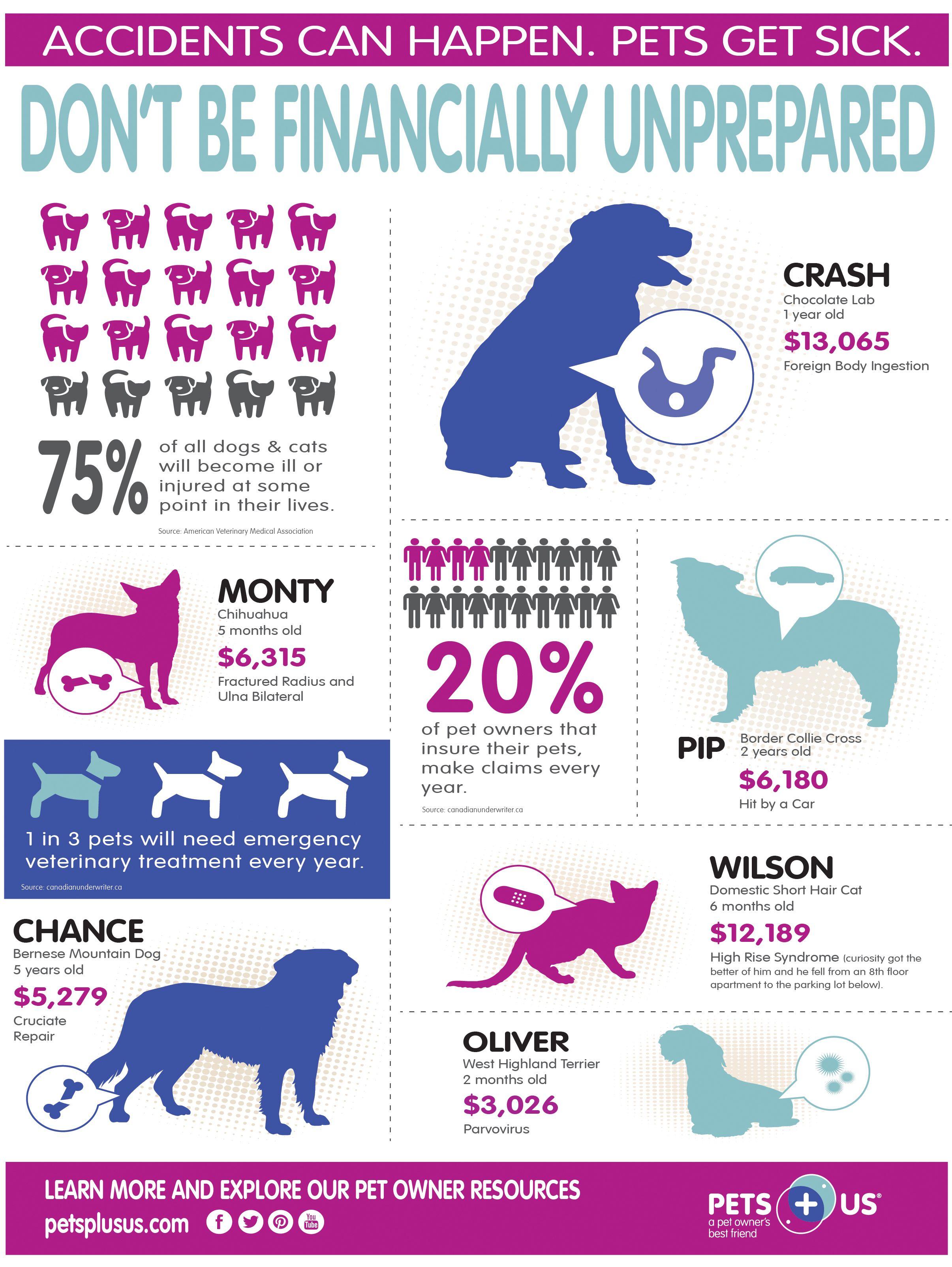 The best pet insurance in 2020 Best pet insurance, Pets