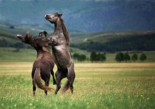 30 Examples of Perfectly Timed Action Photography Horse Animal