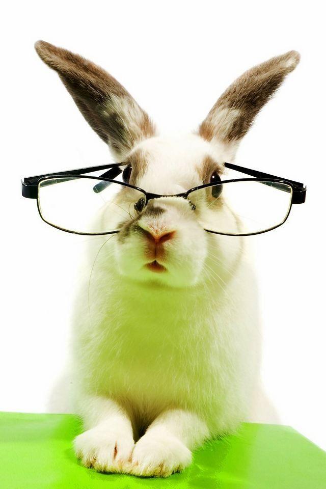 даже зайка в очках фото того, как