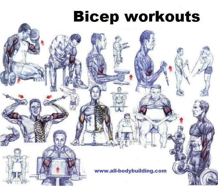 Bicep Workouts For Mass | Best creatine | Pinterest | Tops ...