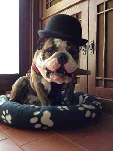 Rook S Halloween Costume Winston Churchill Cute