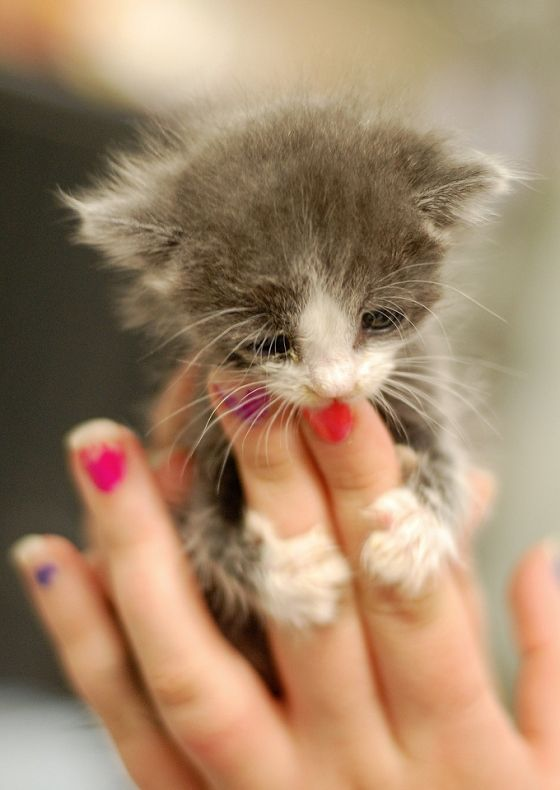 Widdle kitty!