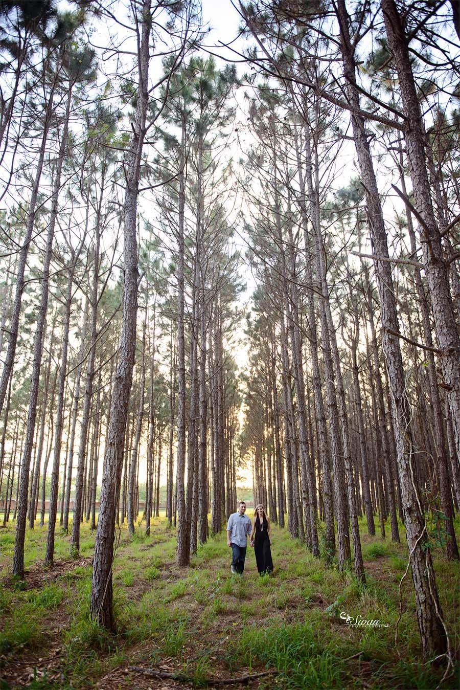 pine tree engagement session orlando wedding photographer