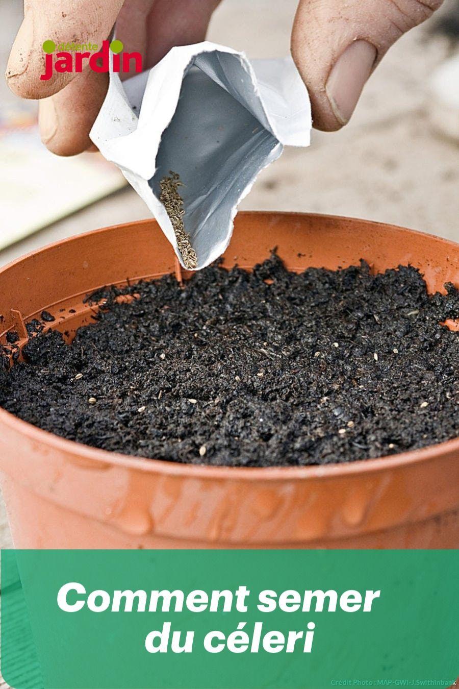 Comment Planter Les Graines De Persil comment semer du céleri | jardinage potager, jardinage et