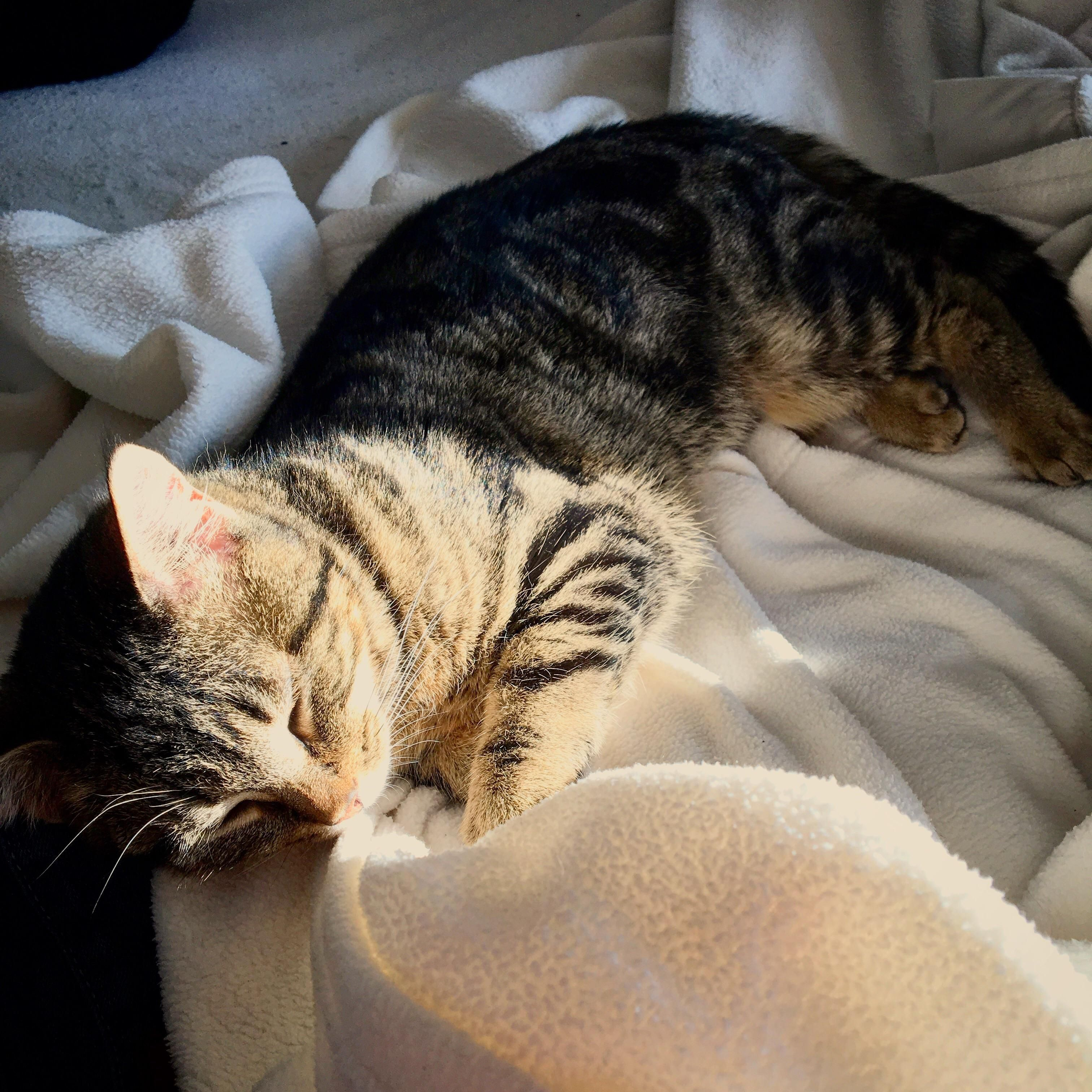 Having A Sunshine Nap My Sisters New Adopted Kitten From Little