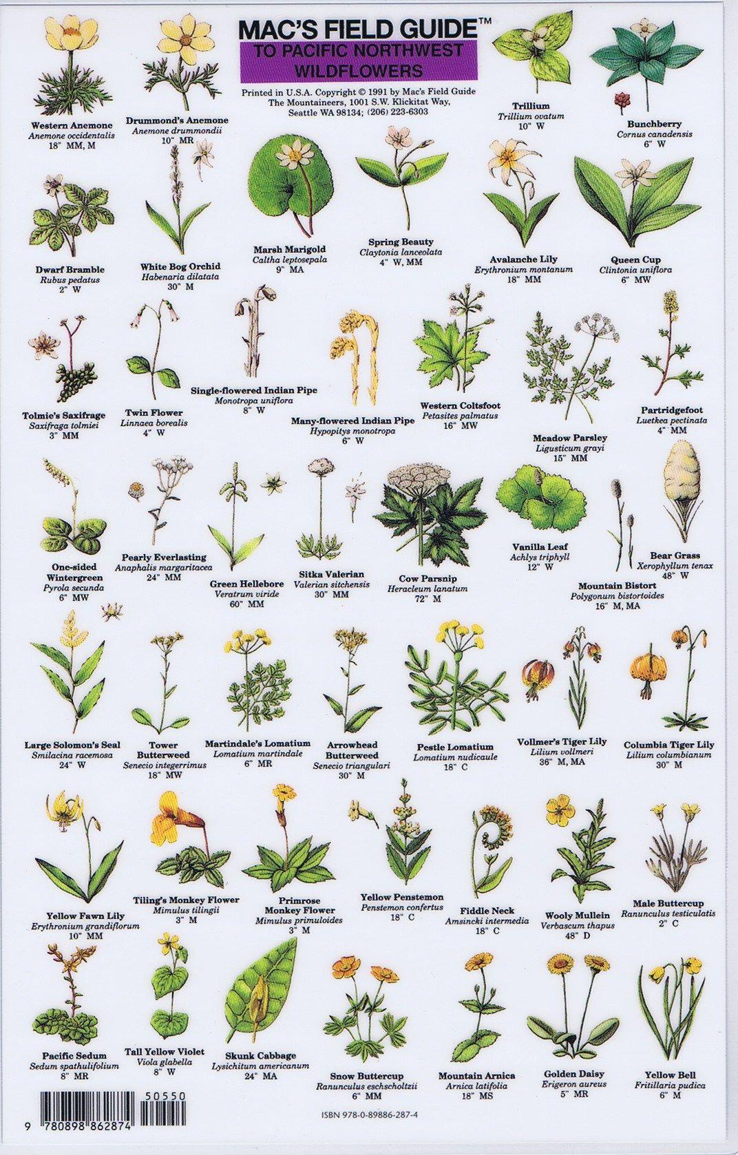 Pacific Northwest Wildflowers Mac S Field Guide Pacific Northwest Flowers White Flowering Trees Pacific Northwest Garden