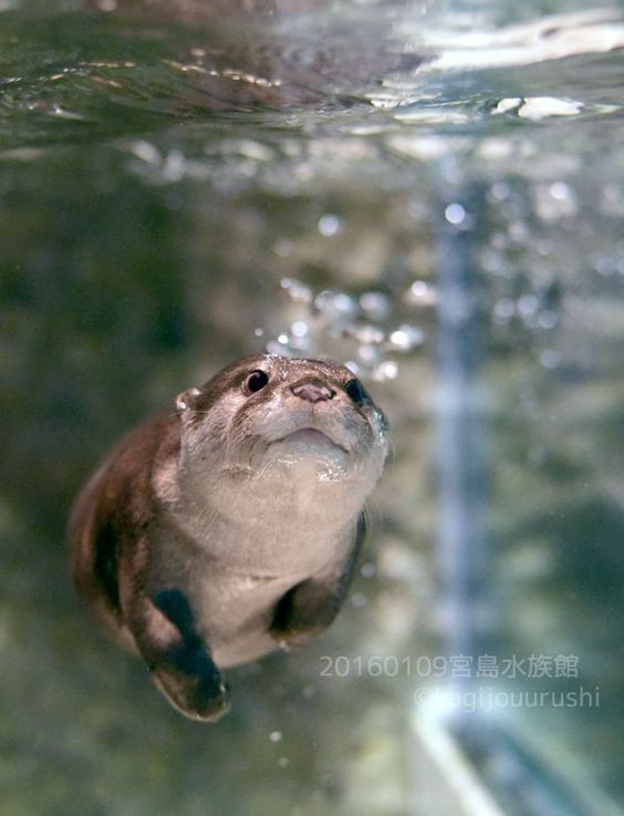 27db9c668 In Otter News on   irreplaceables <3   Cute animals, Animals ...