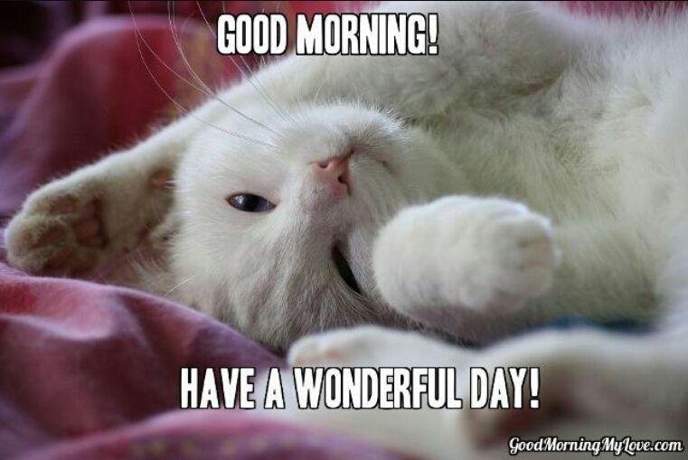 Believe Goedemorgen Katten
