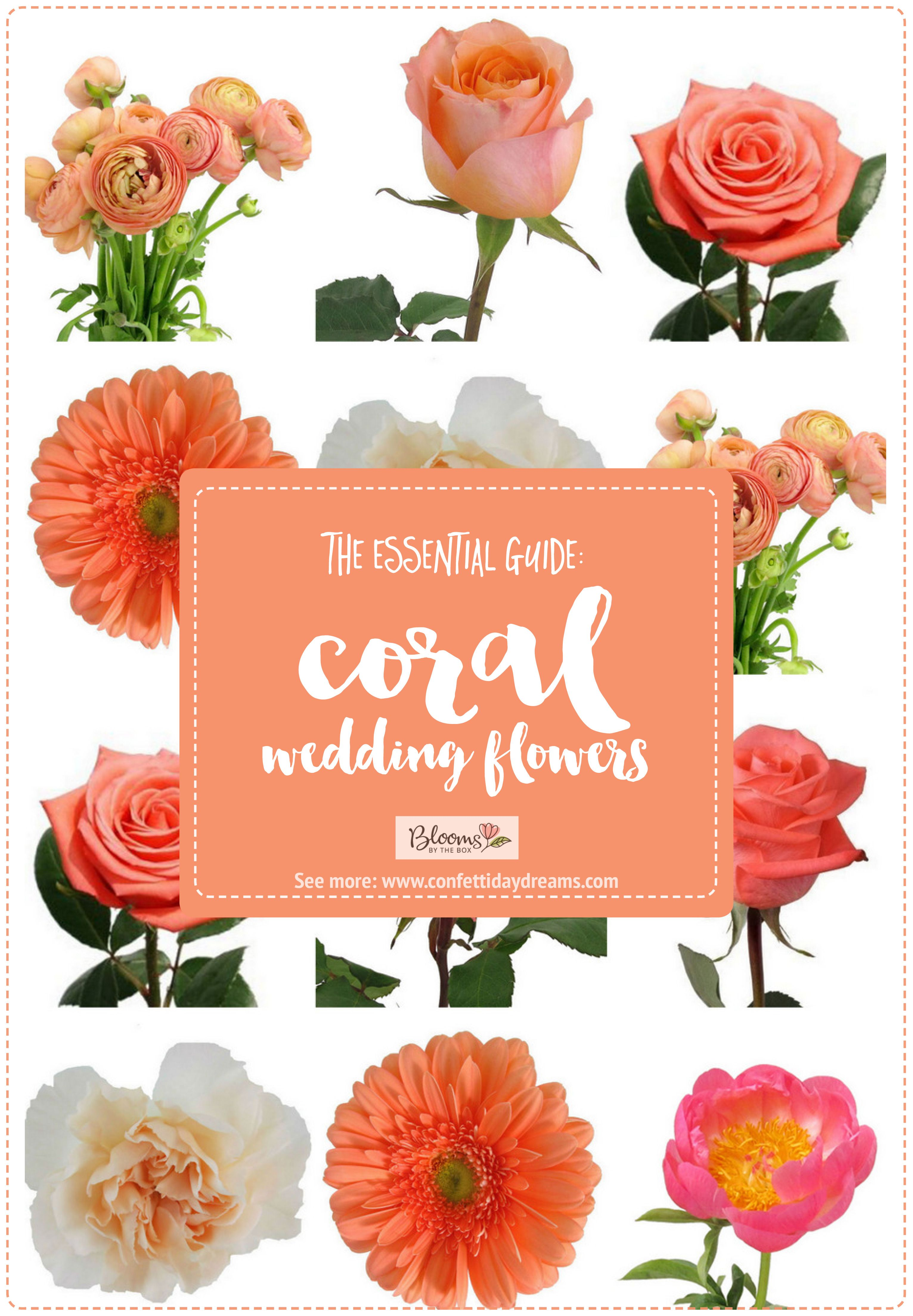 The Essential Coral Wedding Flowers Guide Types Of Peach Flowers