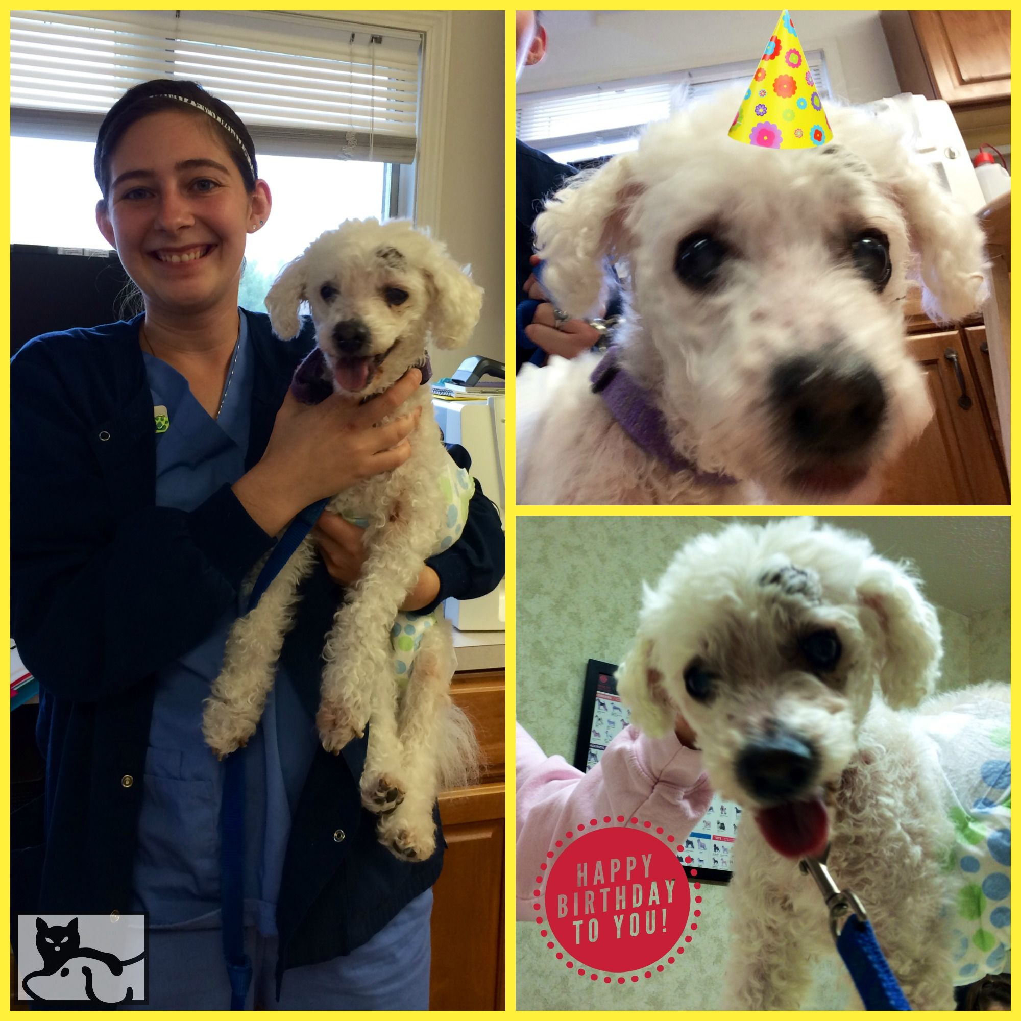 Happy 19th Birthday To Dr Jacobson S Patient Penney 3 Veterinary Hospital Pet Clinic Animal Hospital