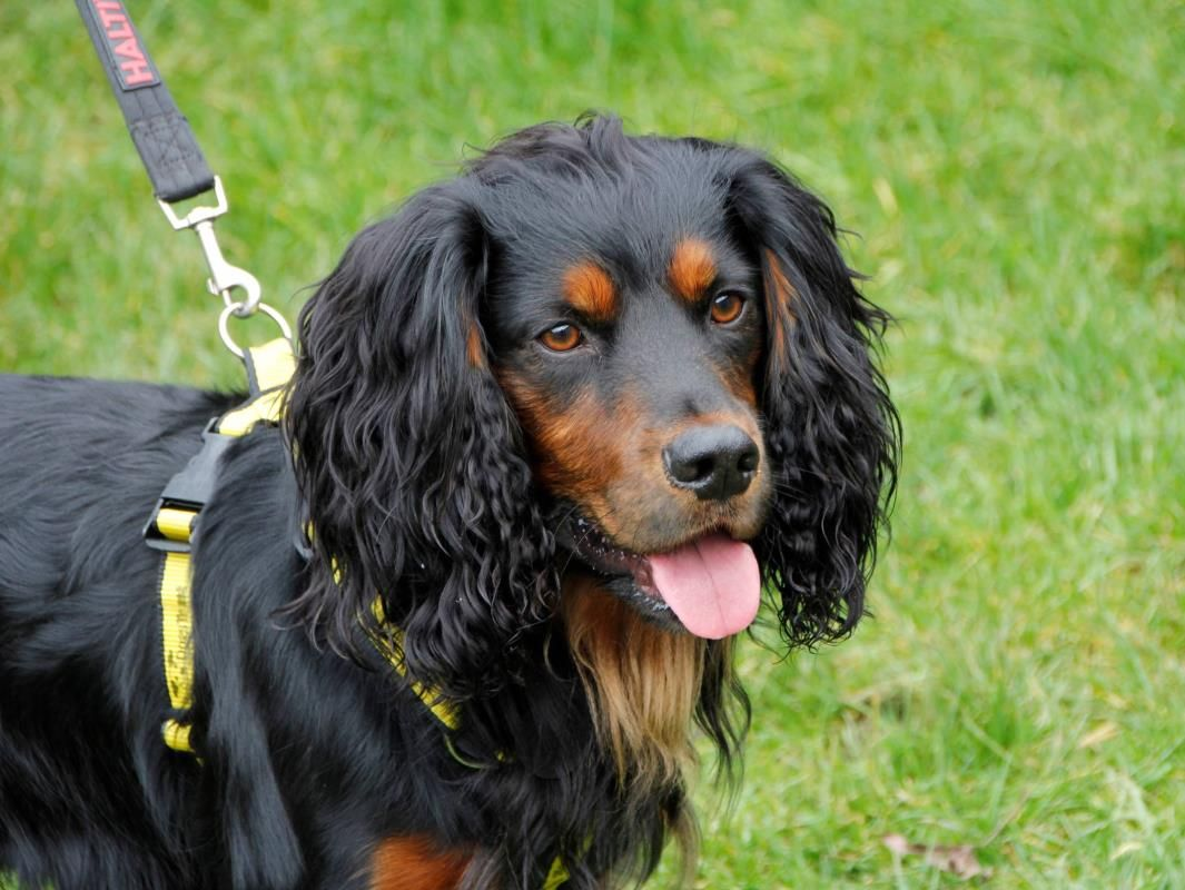 Looking At Hudson Dogstrust Rehomeadog Rehoming Dogs Rescue Dogs