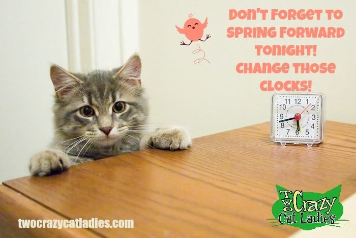 Daylight Savings Time Don T Forget To Spring Forward Tonight Change Those Clocks One Hour Ahead Cats Funny Cat Memes Crazy Cats