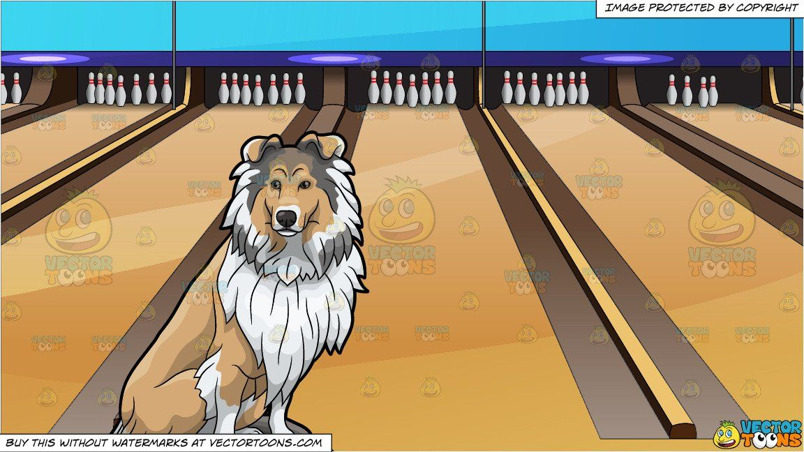 A Proud Looking Collie Sitting On A Rock And Bowling Lanes Background Collie Dog Sitting Rock Guard