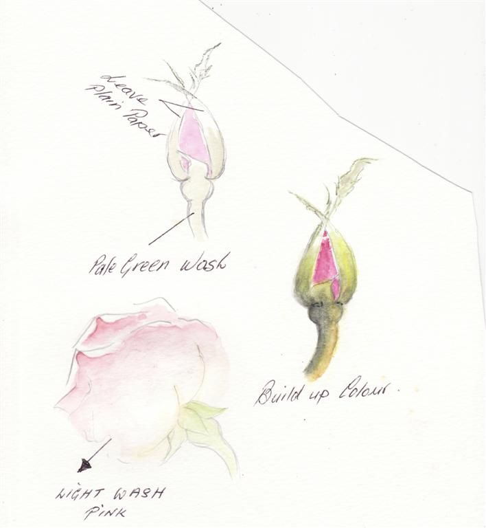 Water Color Pencil Roses Tutorial Step By Step Total Art Soul