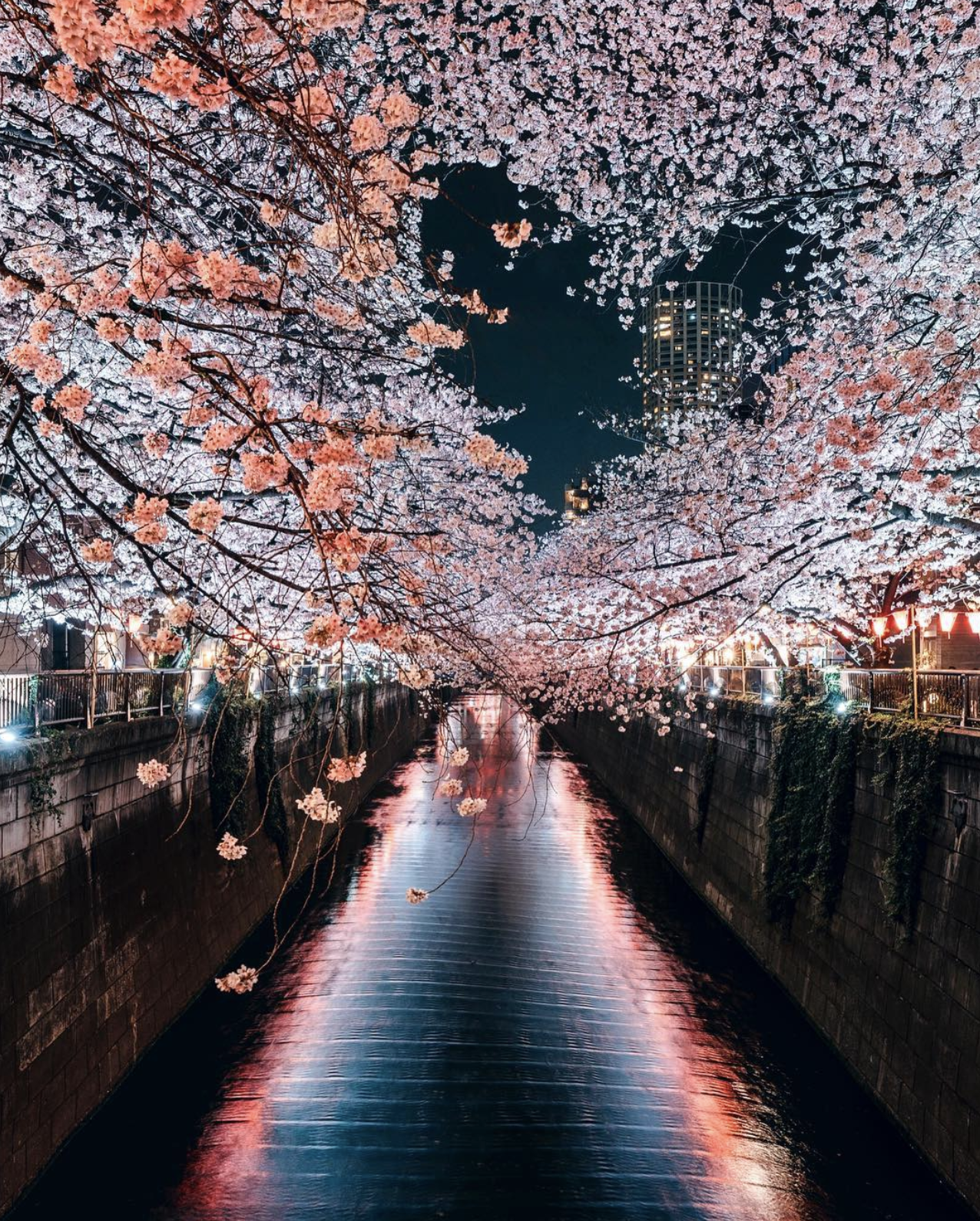 Meguro River Japan X Post From Pics Mostbeautiful Cool Places To Visit Places To Visit Nature Photography