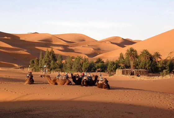 Oasis En El Desierto Del Sahara Paisajes Desierto Sahara Oasis
