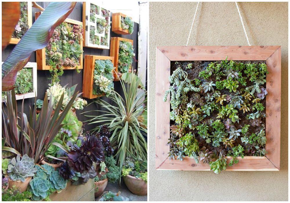 Cactus jardines verticales buscar con google cactusera for Ideas para jardines verticales