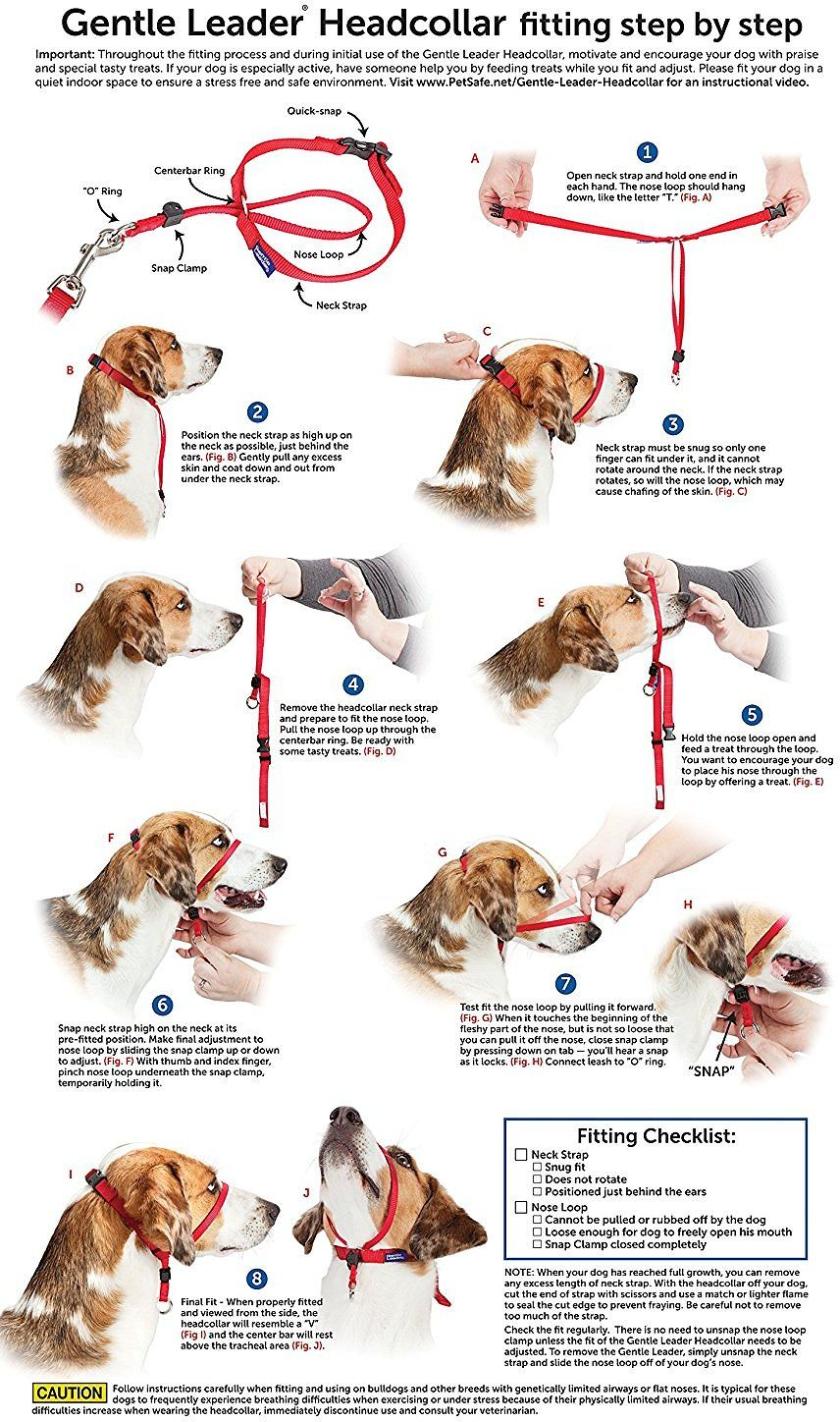 I M Going To Try This With Sp The Petsafe Gentle Leader Dog