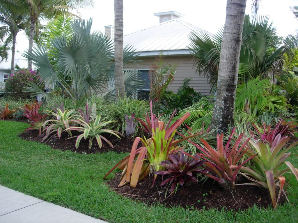 Front yard landscaing with tropical seabreeze for Best no maintenance plants