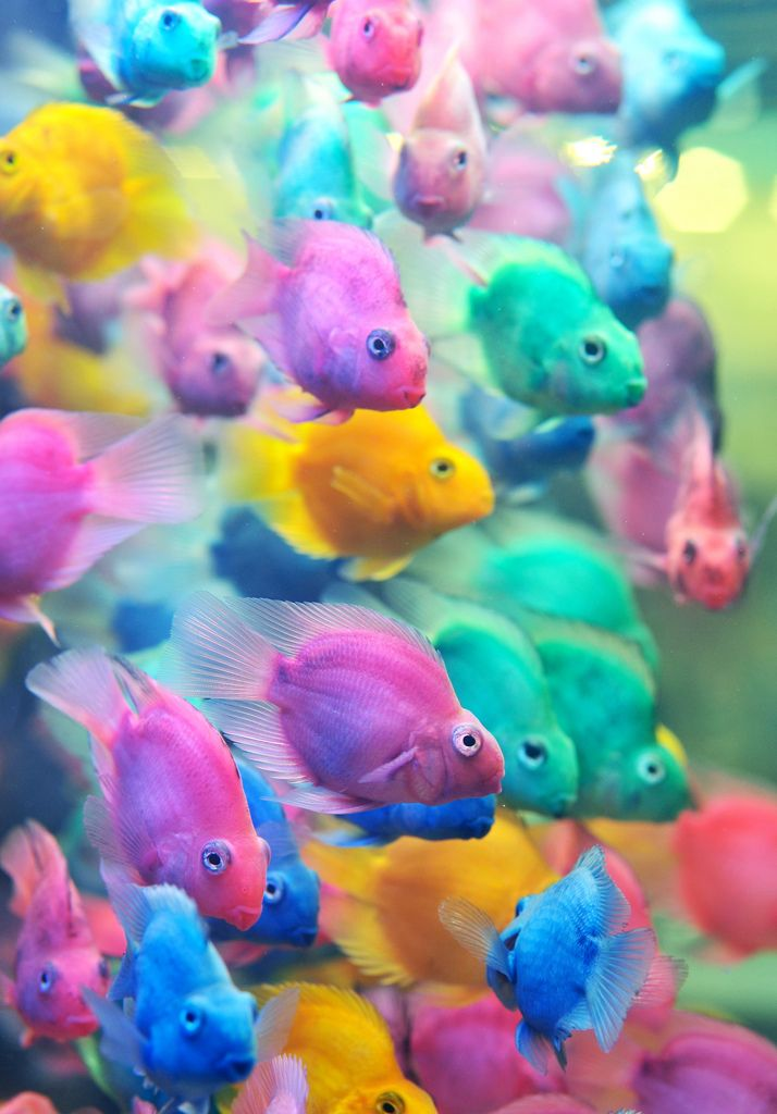 Strange School Of Colorful Tropical Fish Great Pastel