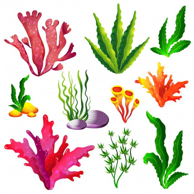 Set Of Colorful Sea Algae Premium Vector Freepik Vector Baby Animal Nursery Art Coral Art Sea Creatures Drawing