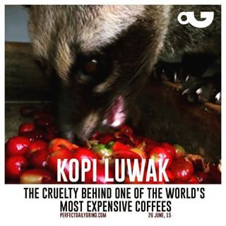 Kopi Luwak: The Cruelty Behind the World's Most Expensive ...