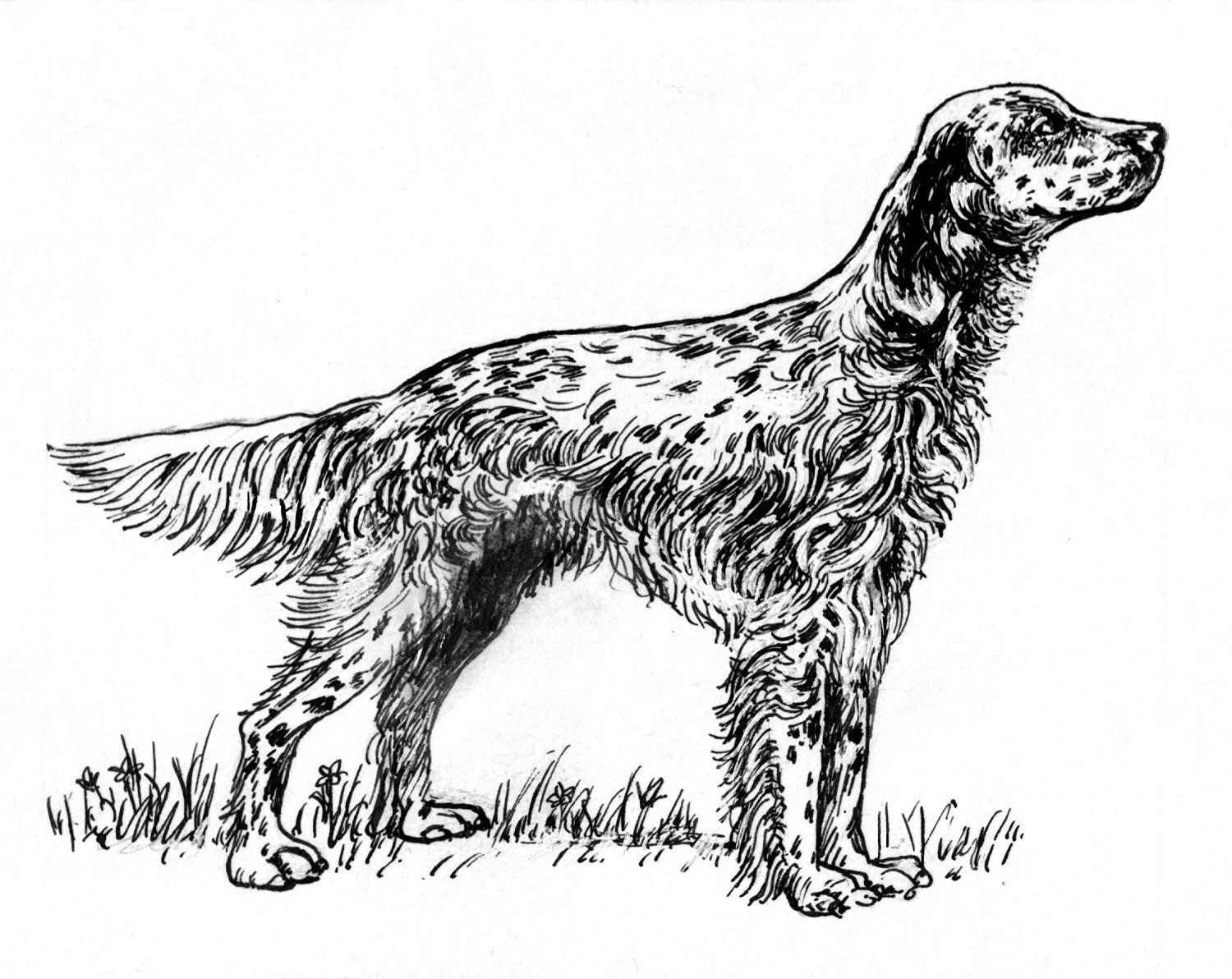 Pack Of 12 Parchment T Tags Line Drawing English Setter