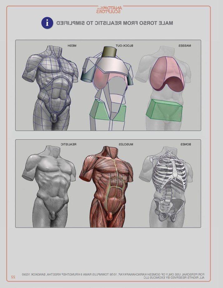 Pin By Sinan Amur On Anatomi Pinterest Anatomy Human Anatomy