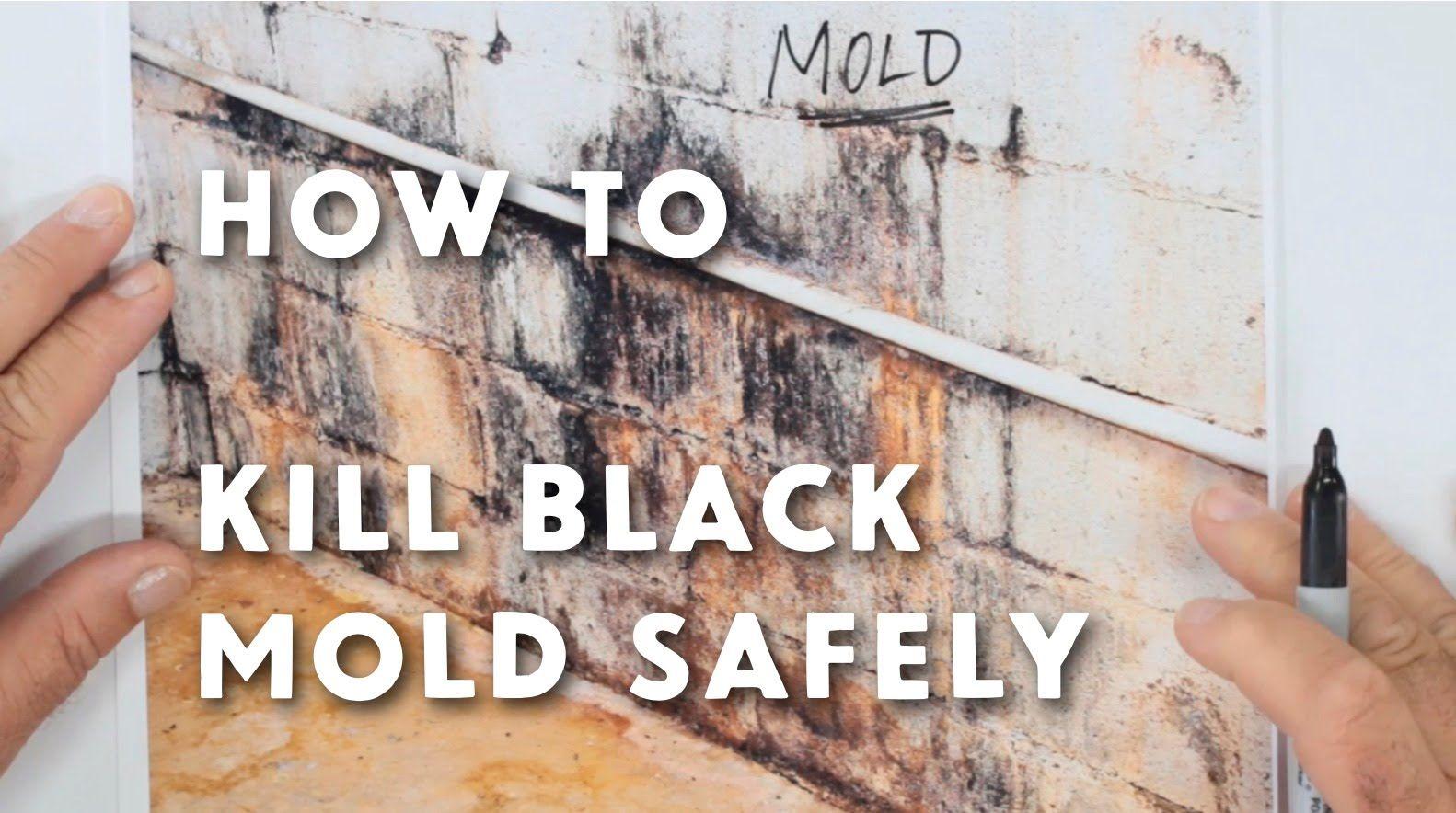Black Mold Safely Forever