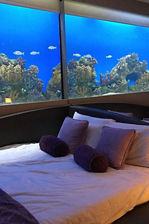 23 unique aquarium bedroom  unique bedroom design