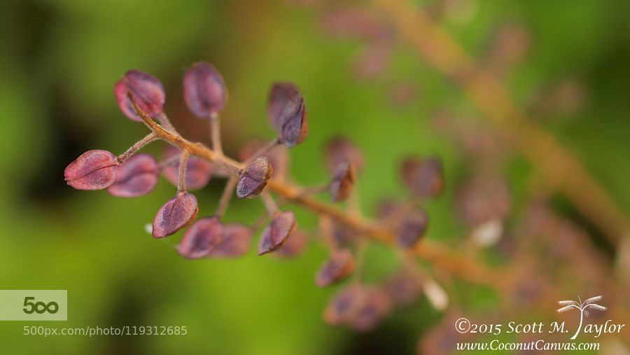 Seeds of Weeds by staylorphd #nature