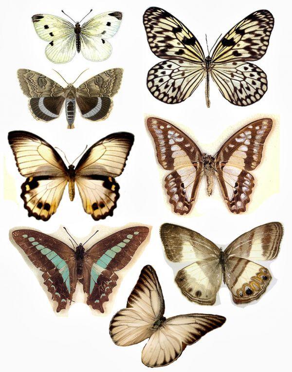Butterflies                                                                                                                                                                                 Más