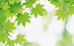 Fondos de hojas hd
