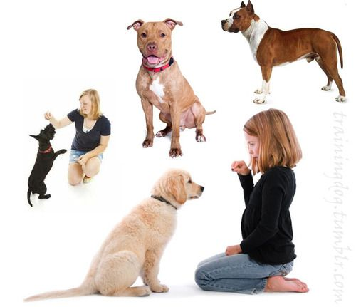 Dog training –training for proper dog behavior - There is also a large amount of causes of teaching proper dog behavior. #Dogs #Animal
