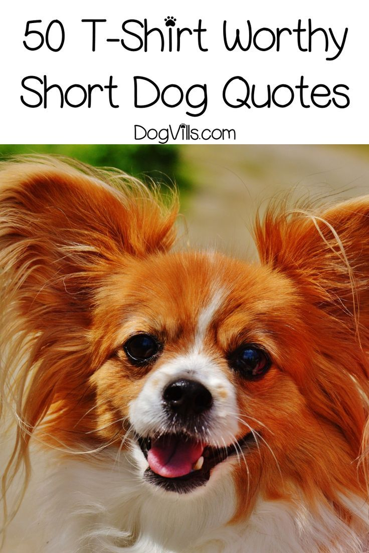 50 Short Dog Quotes That Are Totally T Shirt Worthy Short Dog