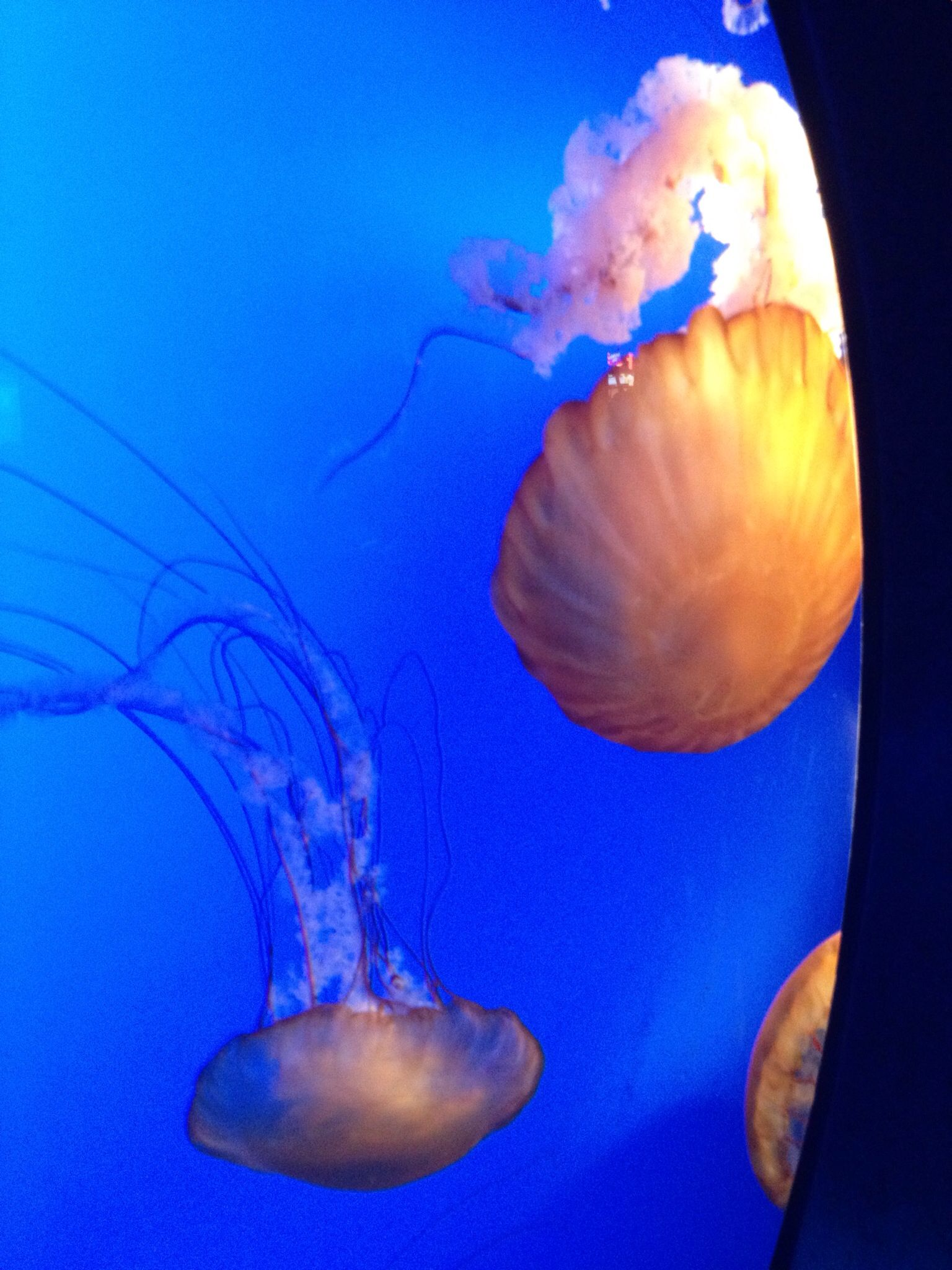 Pin by Sherry Fisher on Jelly Fish Jellyfish, Fish, Animals
