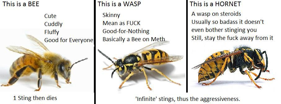 All The Best Of Memes Wasp Best Funny Pictures Bee
