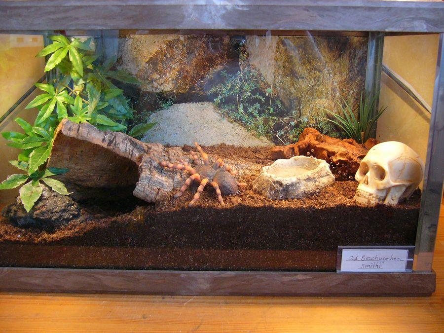 Desert Tarantula Terrarium Google Search Tarantula Tanks Pet