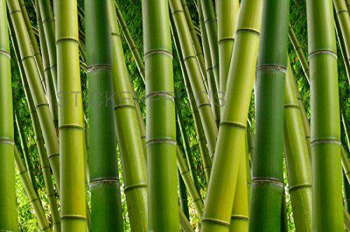 Poster Selbstklebend Bambus Wald Als Fliesenaufkleber Oder Fototapete Xl Bambus Tapete Bambus Kaufen Bambus